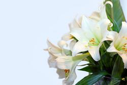 Blumen Lilien